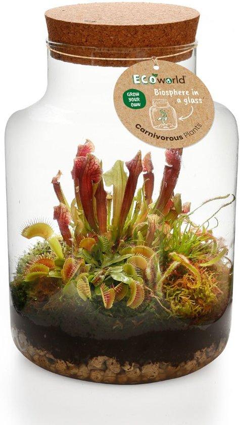 mini ecosysteem met vleesetende planten in glazen bokaal