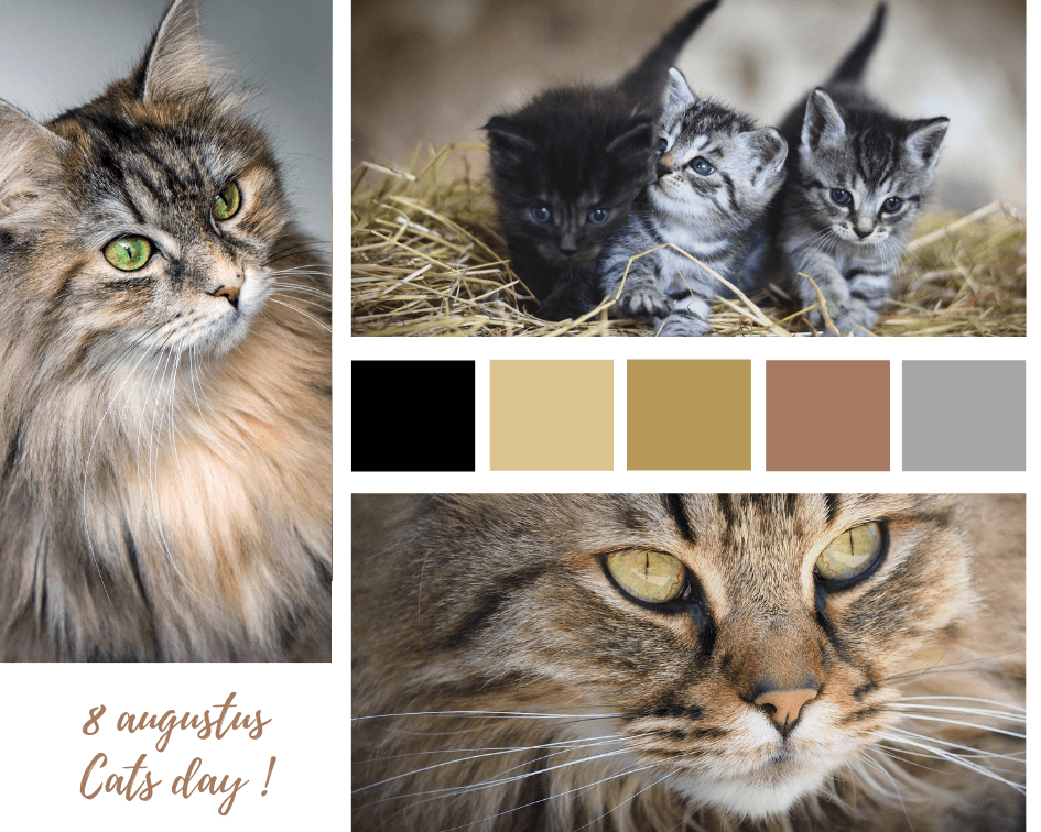 8 augustus – International Cat Day 2019