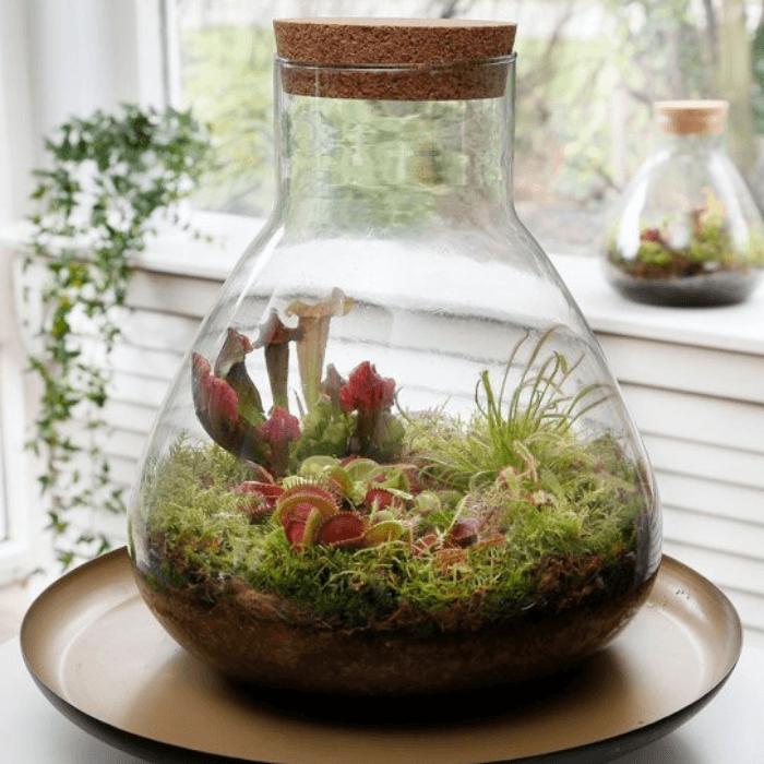 mini ecosysteem met vleesetende planten in glazen bokaal met kurk