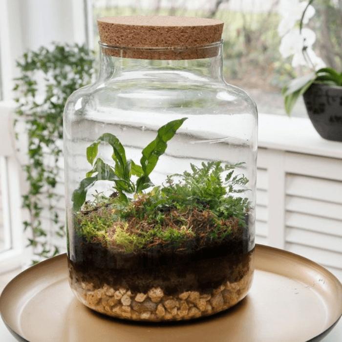 mini ecosysteem met varens in glas