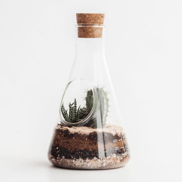 mini ecosysteem met cactus in glas met kurk met opening aan de zijkant