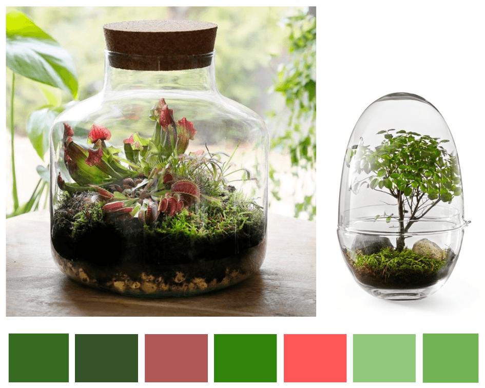 Mini ecosysteem bij jou thuis en DIY