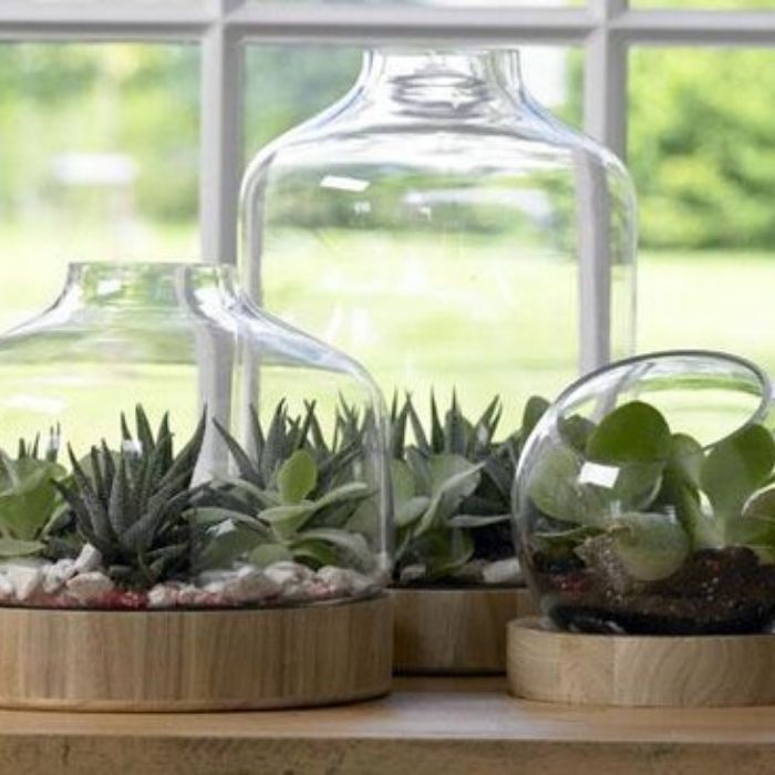 florarium in glazen pot met basis in hout van Cosy@Home